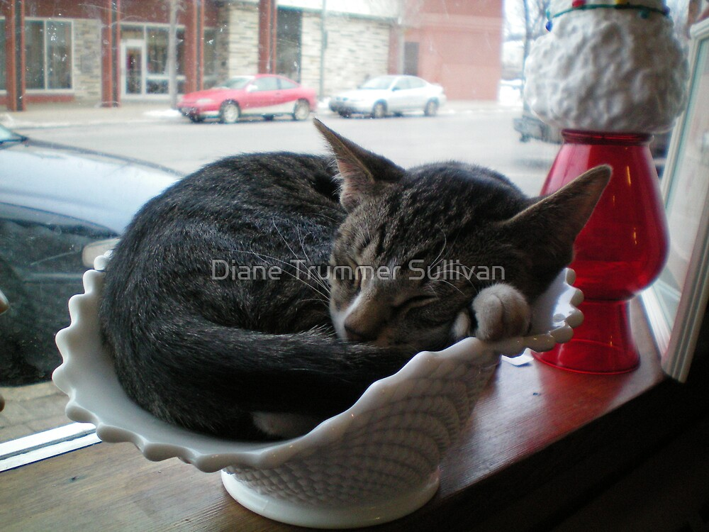 Sterling in the window by Diane Trummer Sullivan