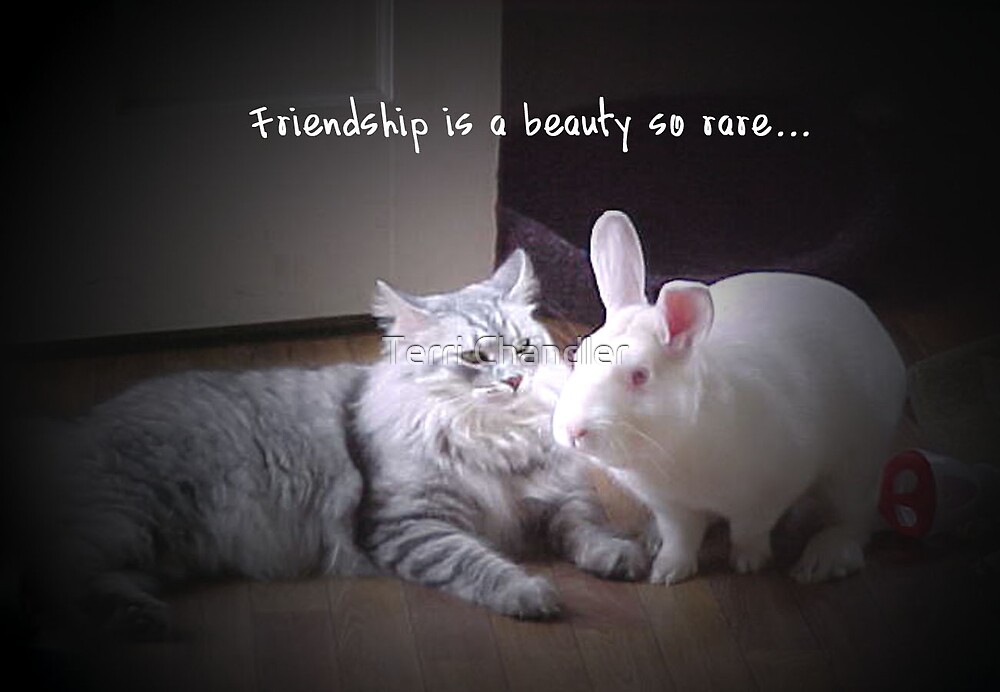 Friendship by Terri Chandler