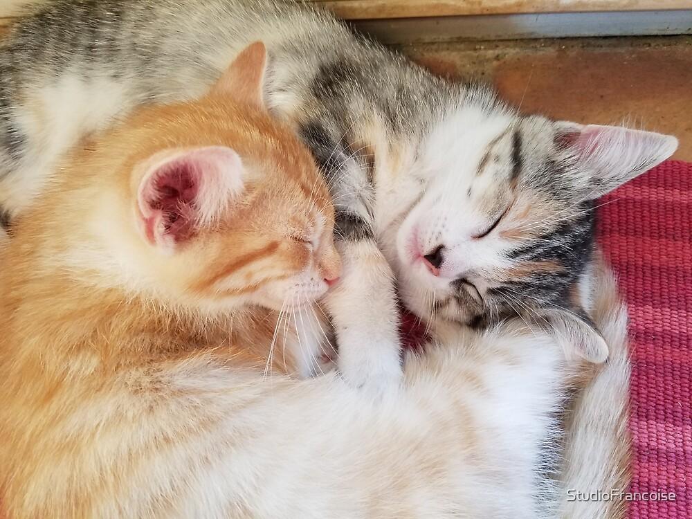 Kitten Nap Time by StudioFrancoise