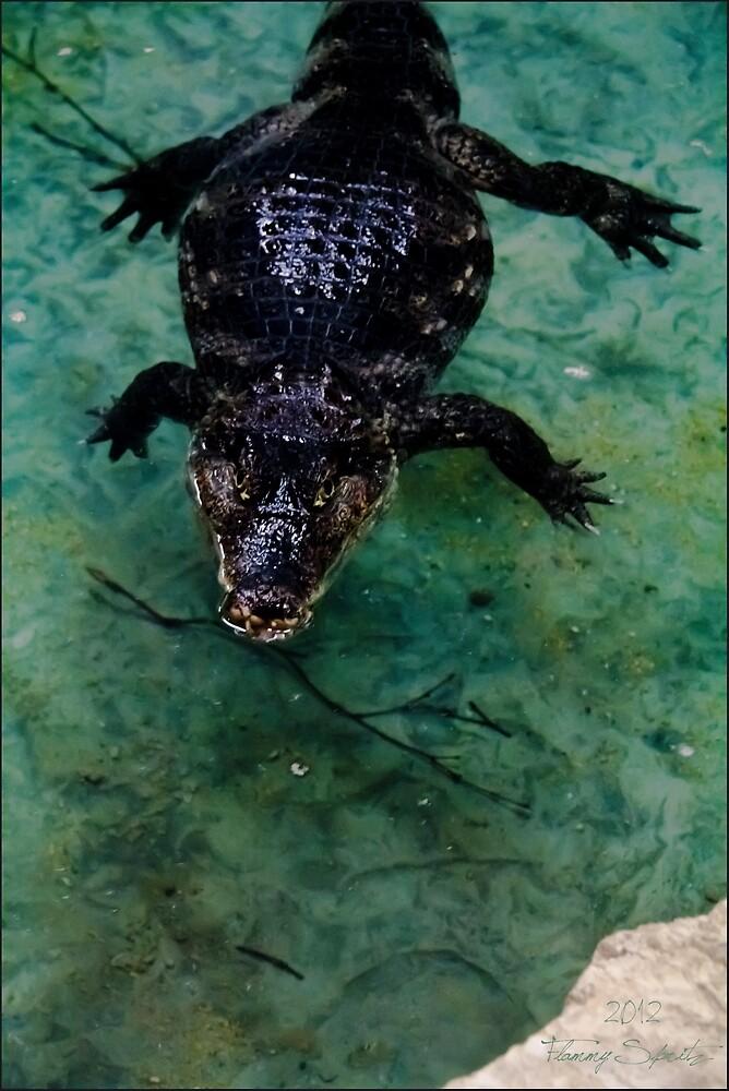Crocodile by SleepingMoonArt