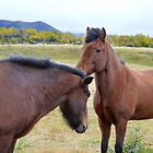 Icelandic Horses Greet Each Other by Catherine Sherman