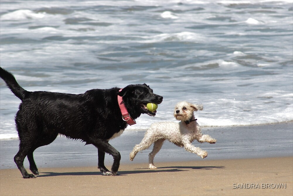 Two dogs playing in the ocean by SANDRA BROWN