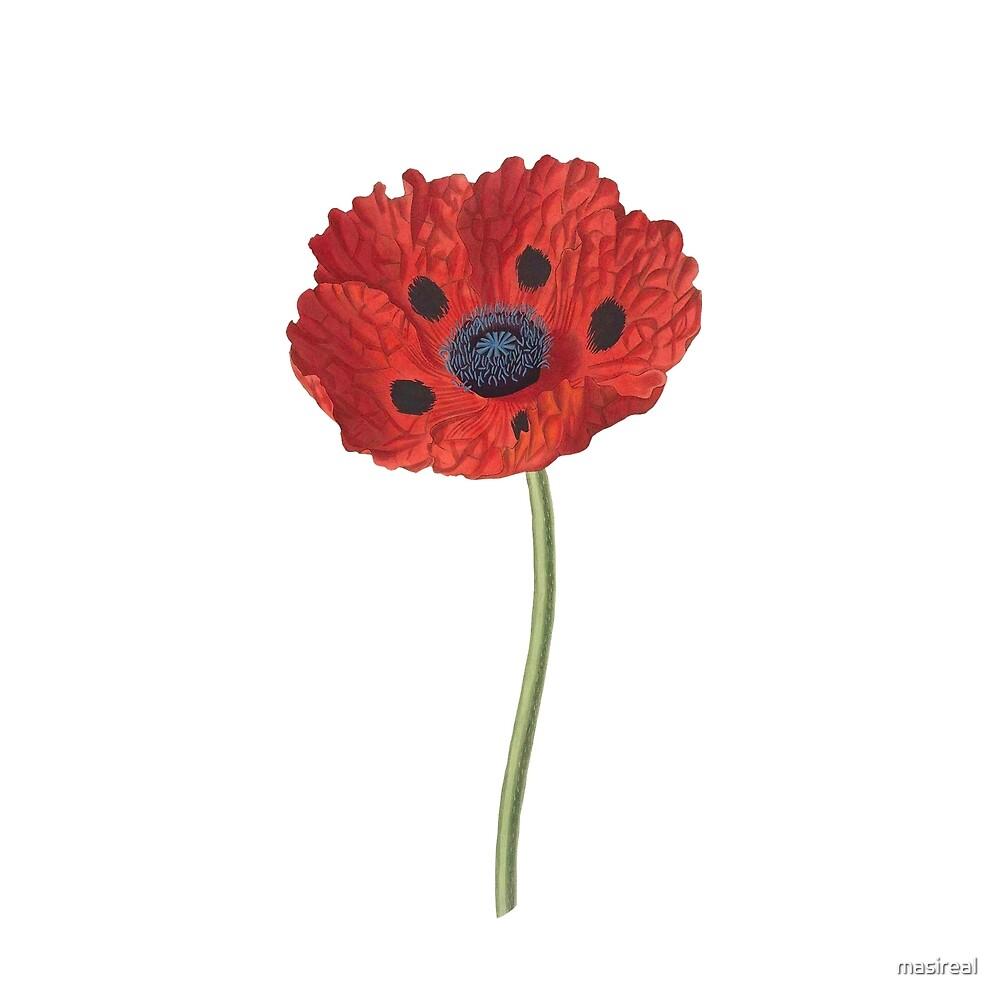 Elegant poppy by masireal