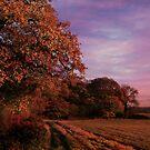 Evening Fall by emajgen