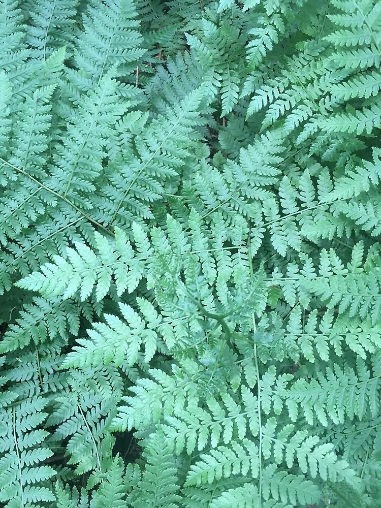 Leatherleaf fern by hasfeetwillwalk