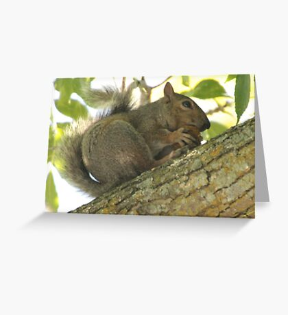 Squirrel in Ash Tree with Walnut Greeting Card