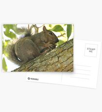 Squirrel in Ash Tree with Walnut Postcards