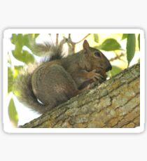 Squirrel in Ash Tree with Walnut Sticker