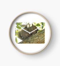 Squirrel in Ash Tree with Walnut Clock