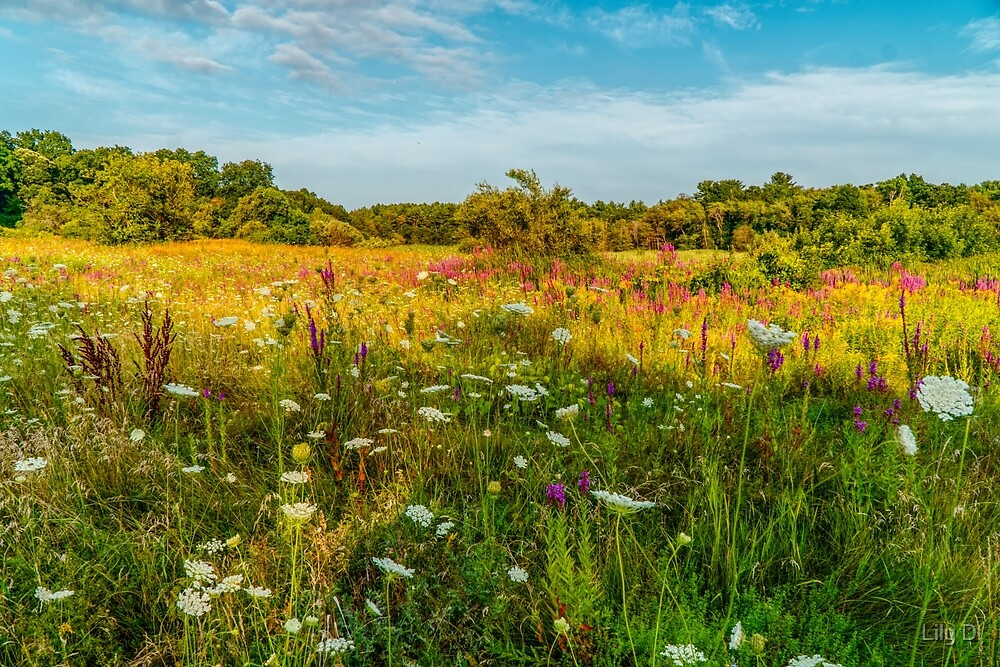 Beautiful summer meadow landscape by Art Dream Studio