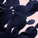 «Cactus negro en rosa» de by-jwp