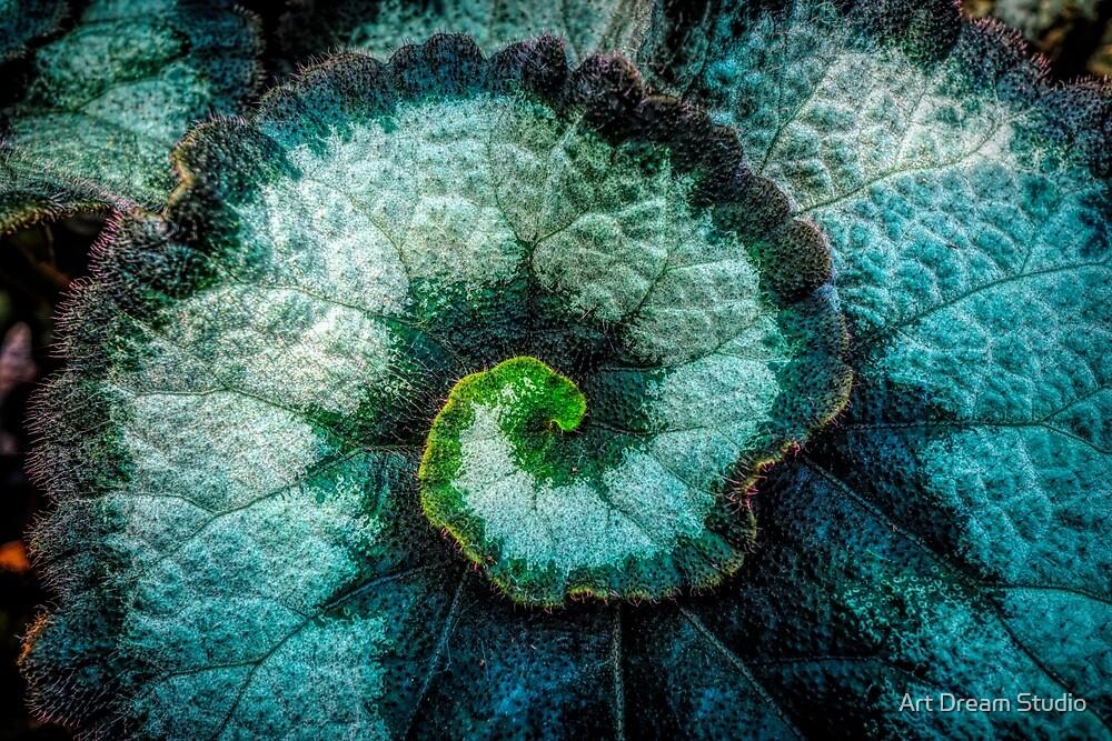 Macro close up swirl leaf by Art Dream Studio