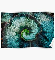 Macro close up swirl leaf Poster