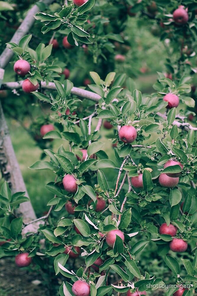 Apples by shotsbymorgan