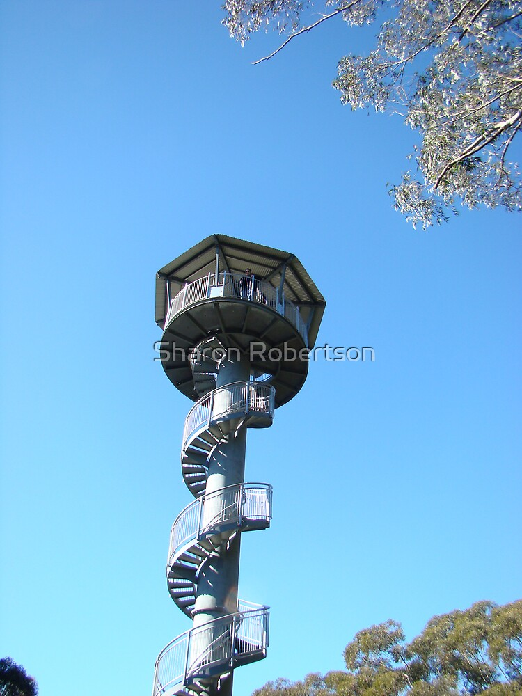 Illawarra Fly Tower by Sharon Robertson
