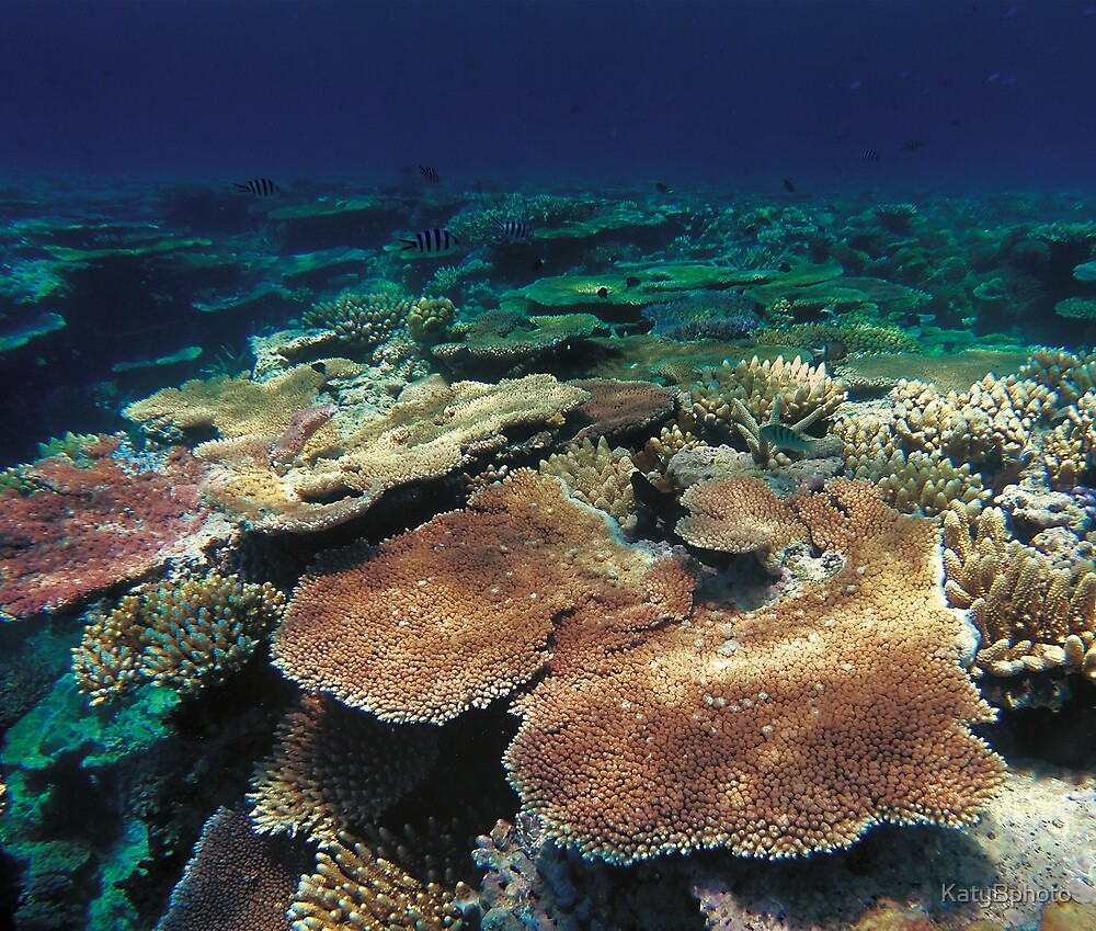 The Great Barrier Reef by KatyBphoto