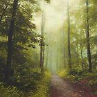 Long Forest Walk by Dirk Wuestenhagen