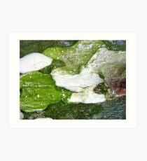 The Green Turtle Art Print