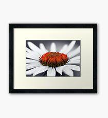 Echinacea Heart Framed Print
