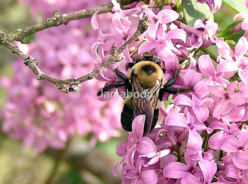 Bee nice by Jamaboop