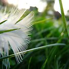 Angel's wings... by Freya  Sykes