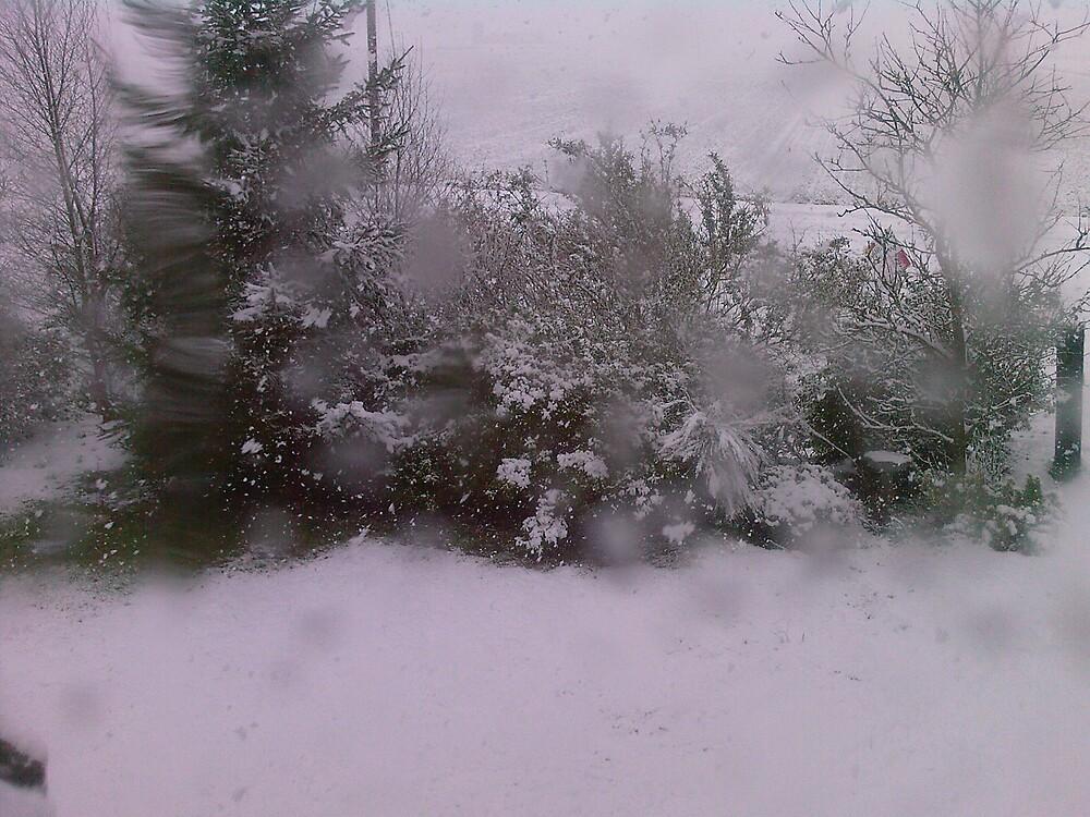 The snow in my garden by Kloe McKernan