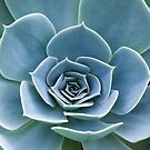 Succulent dream by Martina Cross