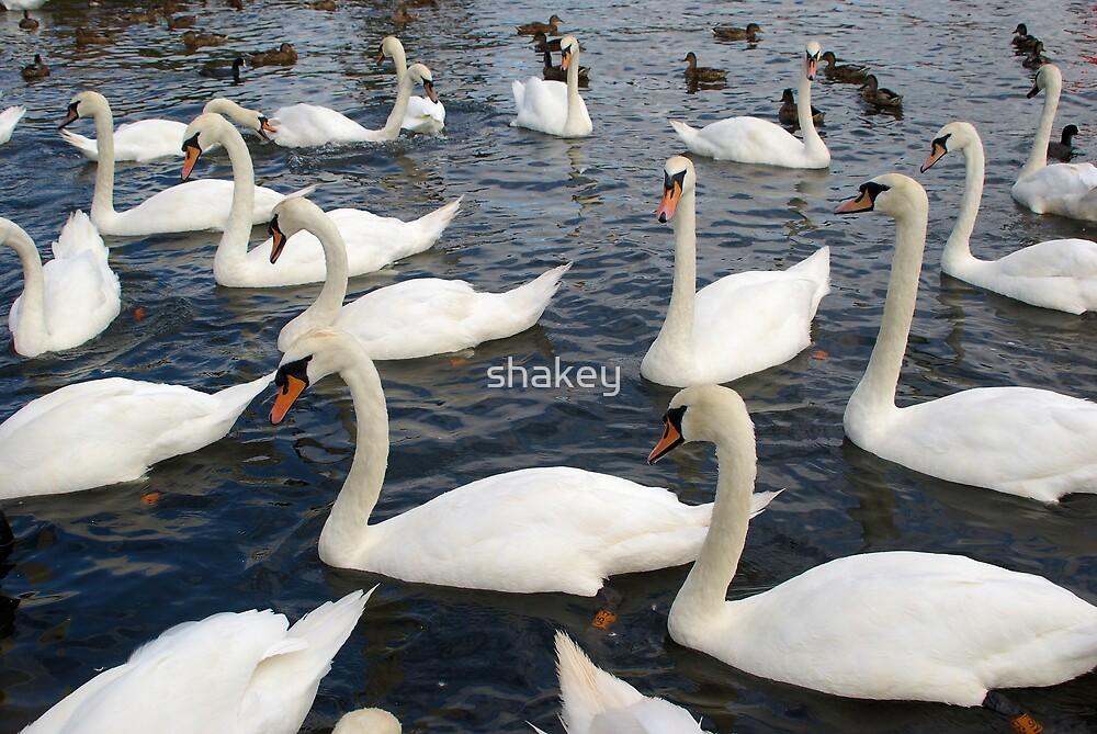 Swan lake ? by shakey