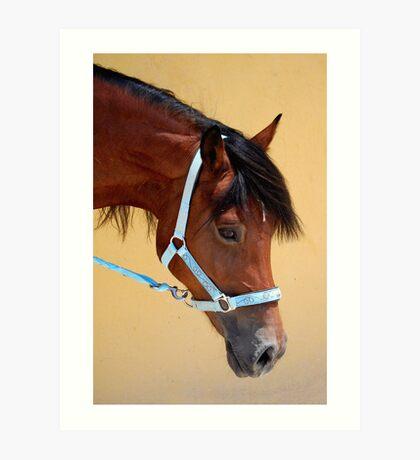 Am I just the prettiest mare? Art Print