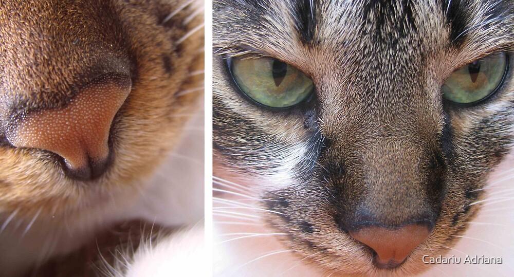 CloseUp Tigra by Cadariu Adriana