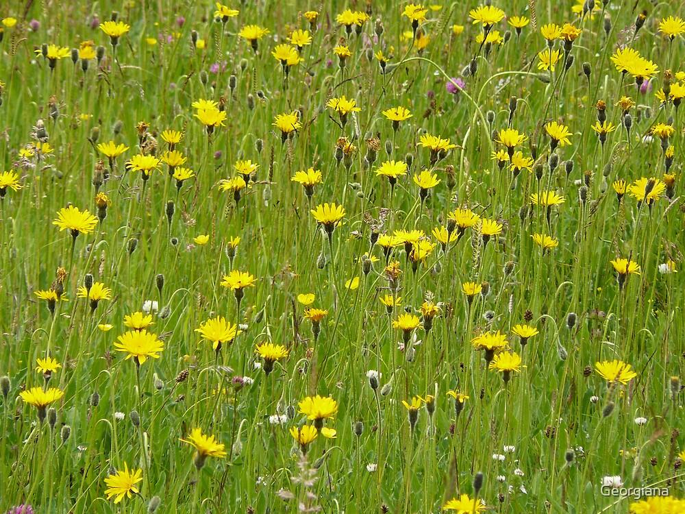 yellow field by Georgiana