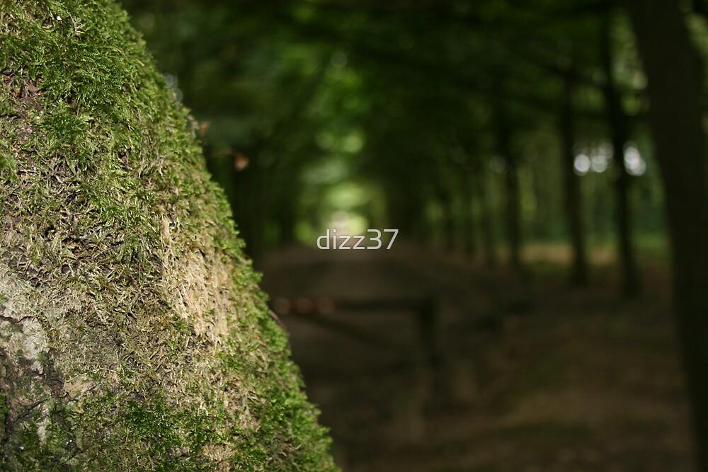 Untitled by dizz37