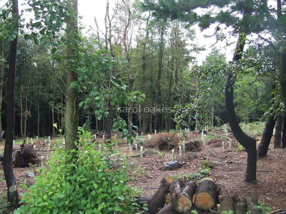 cut down woodland by carol oakes