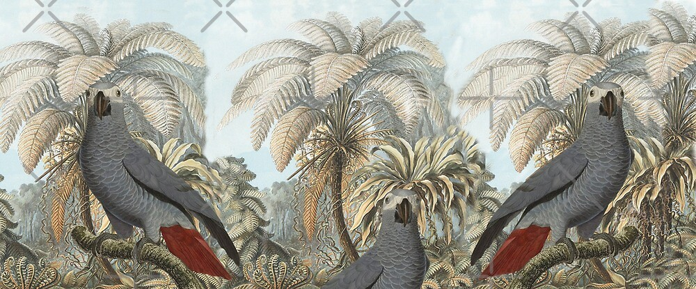 Grey Parrots by hyggenok