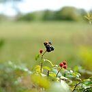 """ Blackberry Meadow "" by Richard Couchman"