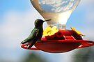 Hummingbird 2 by G. David Chafin