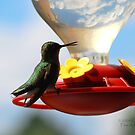 Hummingbird 2 by G. David Chafin