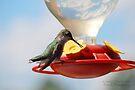 Hummingbird 3 by G. David Chafin