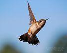 Hummingbird 5 by G. David Chafin