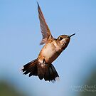 Hummingbird 5 by G. David Chafin