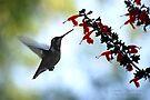 Hummingbird 10 by G. David Chafin