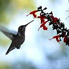 Hummingbird 10 by G. David Chafin