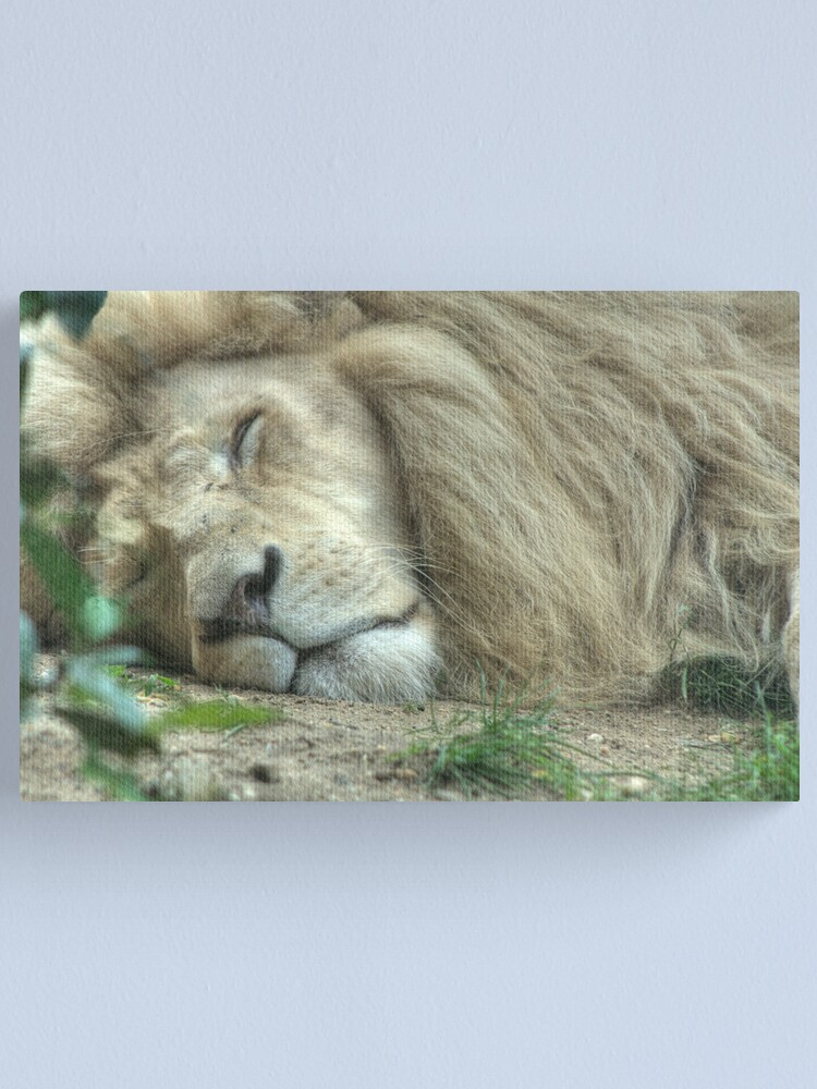 Alternate view of White Lion Canvas Print