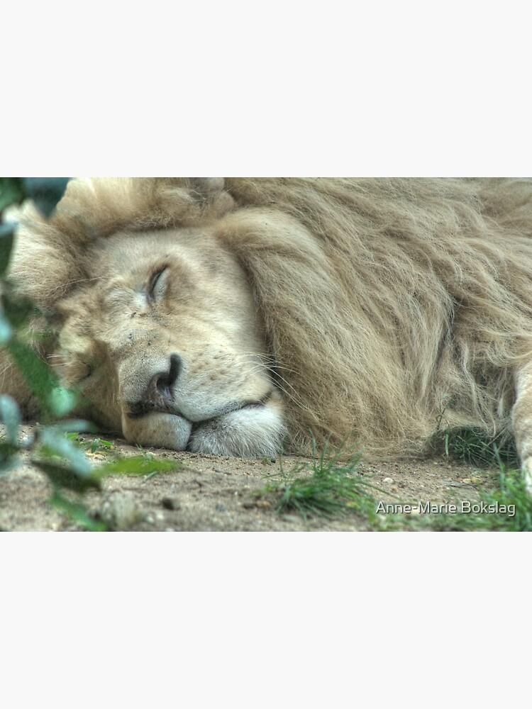 White Lion by amb1946
