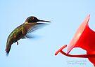Hummingbird 1 by G. David Chafin