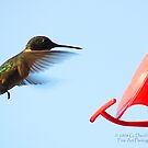 Hummingbird 1 by G. David Chafin