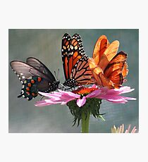 Butterfly Convention Photographic Print