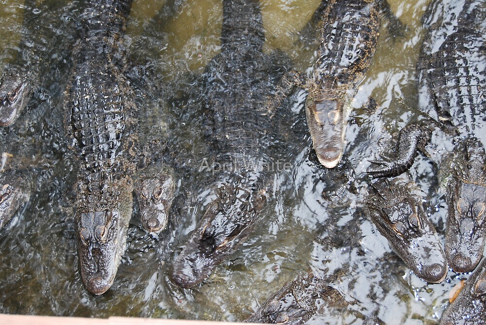 Tons of Gators by April White