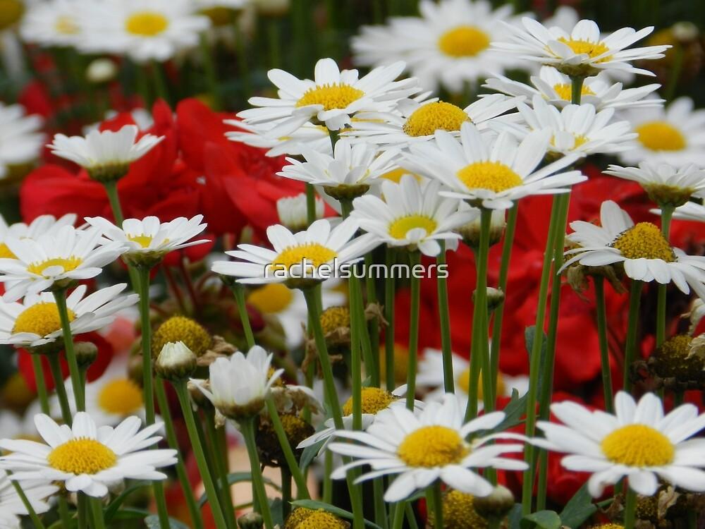 Daisy Garden by rachelsummers