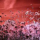 Flowers of the Sun by Paula Bielnicka
